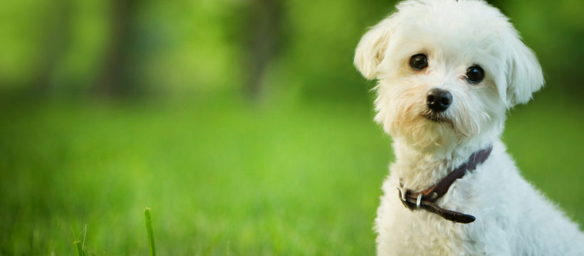 Pet Insurance: One Size Does Not Fit All